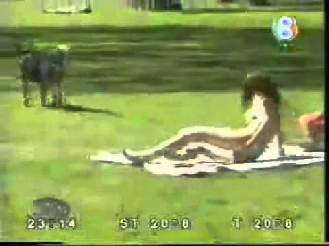 ΠΟΛΥ ΓΕΛΙΟ !! Ο σκύλος που παρενοχλεί σεξουαλικά!!! (video)