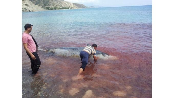 delfinia-kriti2