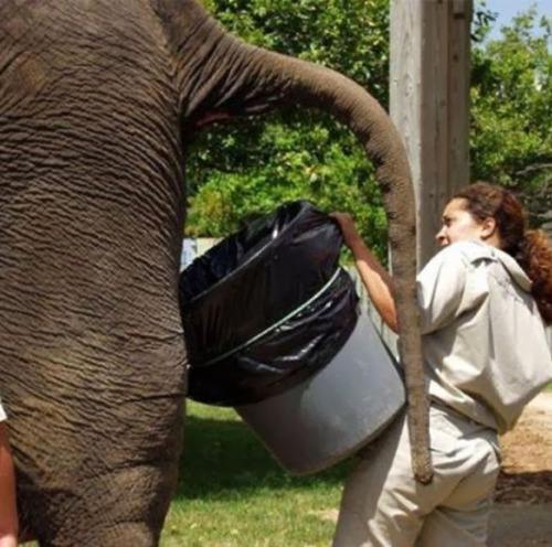 bad-jobs-elephant