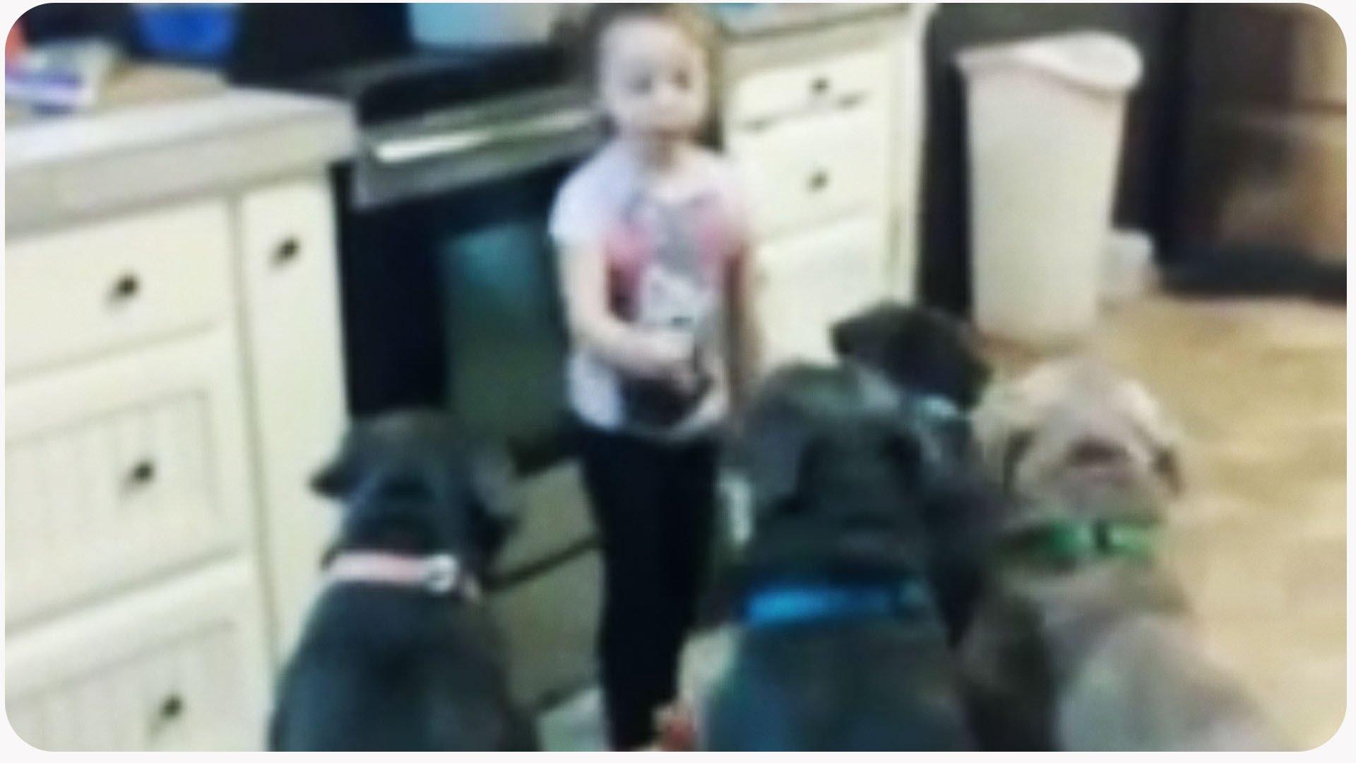 Μικρό κορίτσι περικυκλωμένο από 6 πίτμπουλ. Η συνέχεια θα σας καταπλήξει…(Video)