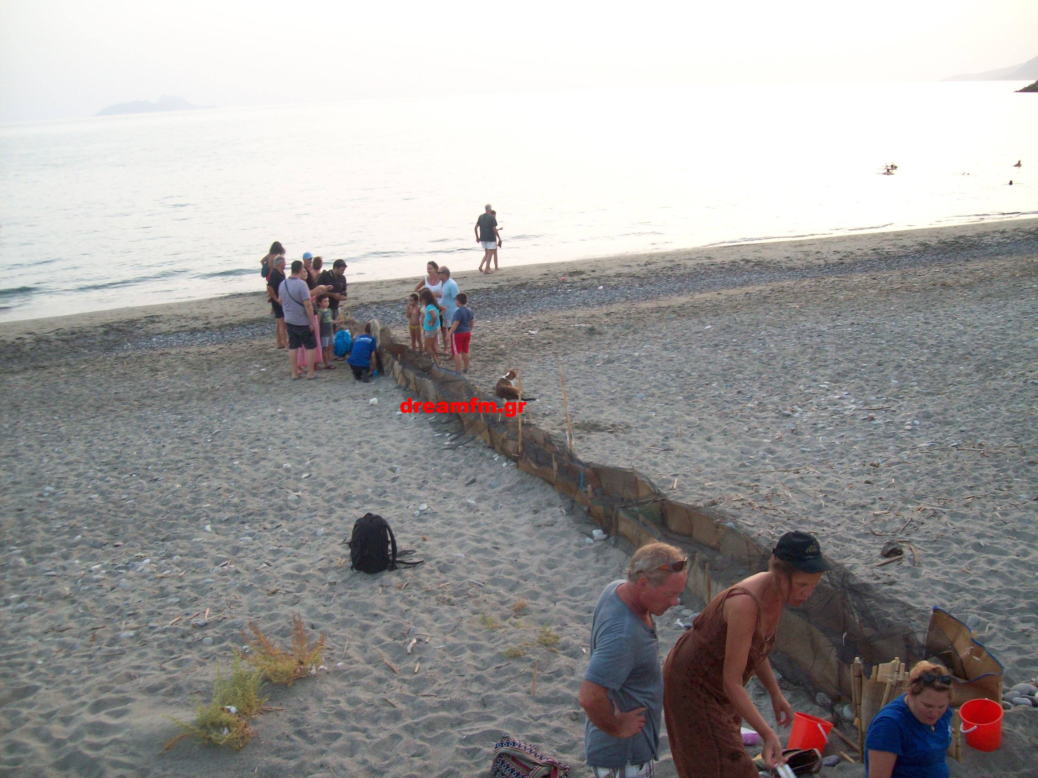 Εθελοντές και λουόμενοι παρακολουθούν το χελωνάκι