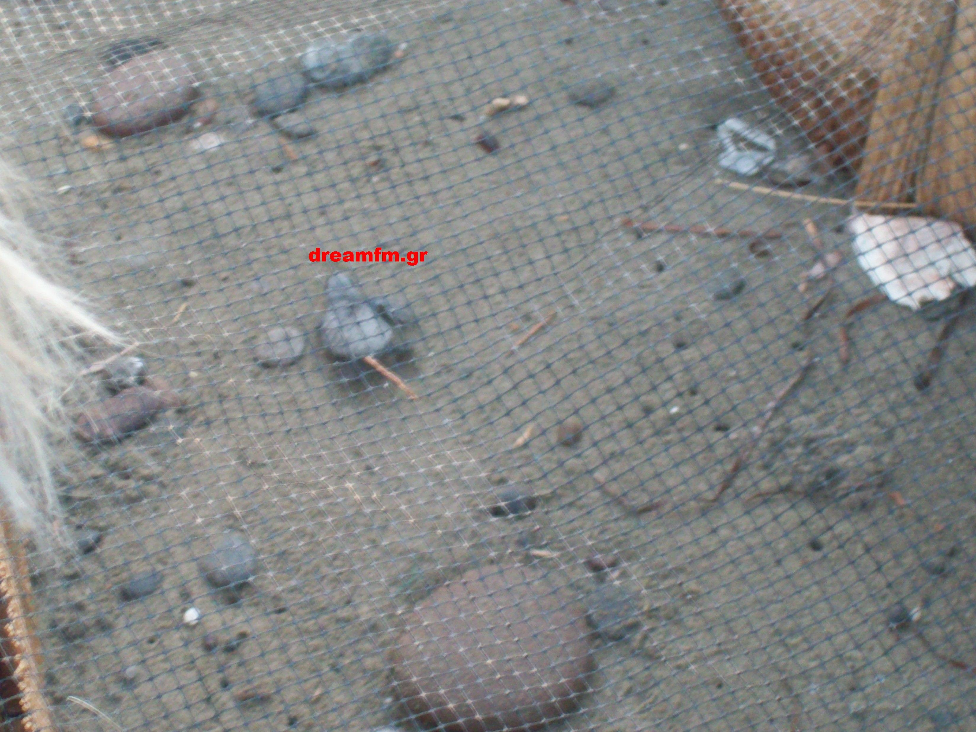 Ένα χελωνάκι στο δρόμο προς την ελευθερία