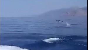 delfinia321