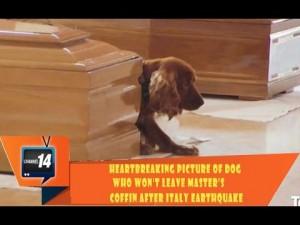 Σύμβολο πίστης και αφοσίωσης: Σκύλος «φυλάει» το φέρετρο του ιδιοκτήτη του στην Ιταλία (Video)