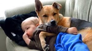 Το βίντεο που συγκίνησε όλο το διαδίκτυο: Σκύλος αγκαλιάζει άρρωστο μωρό για να το ζεστάνει!