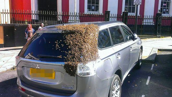 melises car