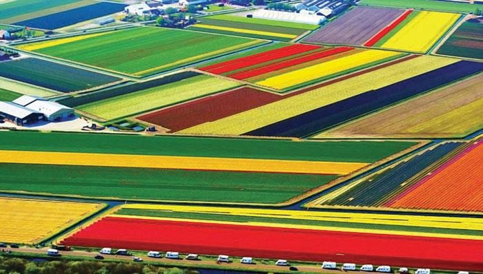 olandia themo8