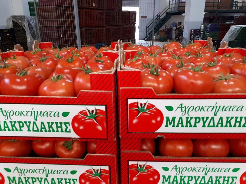 tomates11