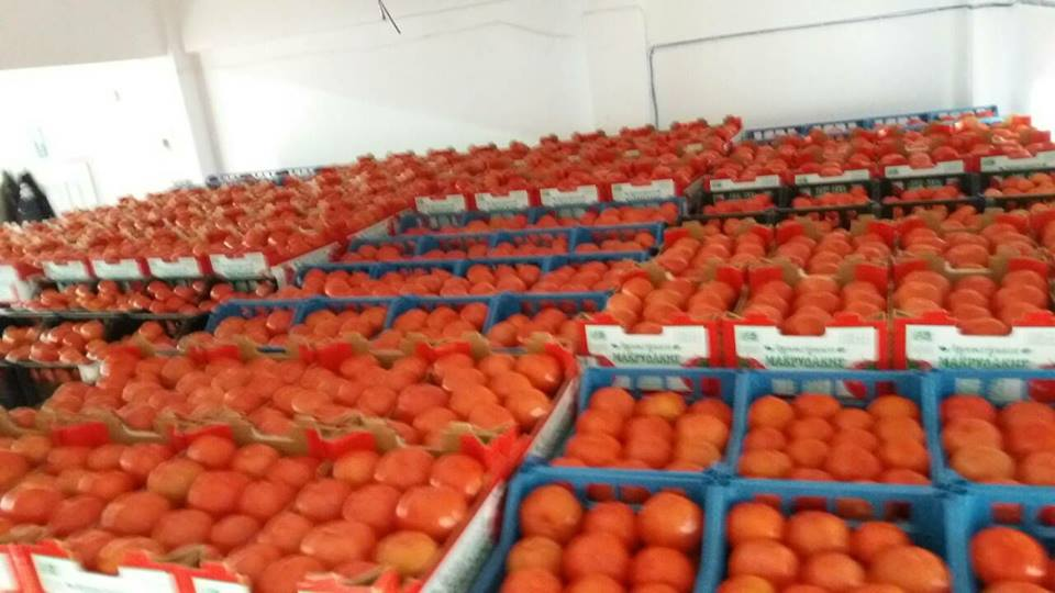 tomates14