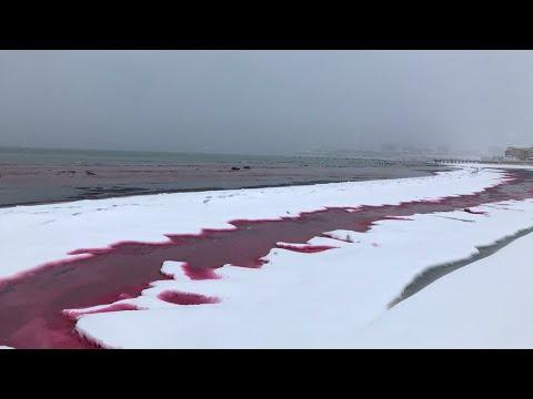Η θάλασσα έγινε κόκκινη σαν αίμα στο Καζακστάν – Πώς εξηγούν οι επιστήμονες το φαινόμενο