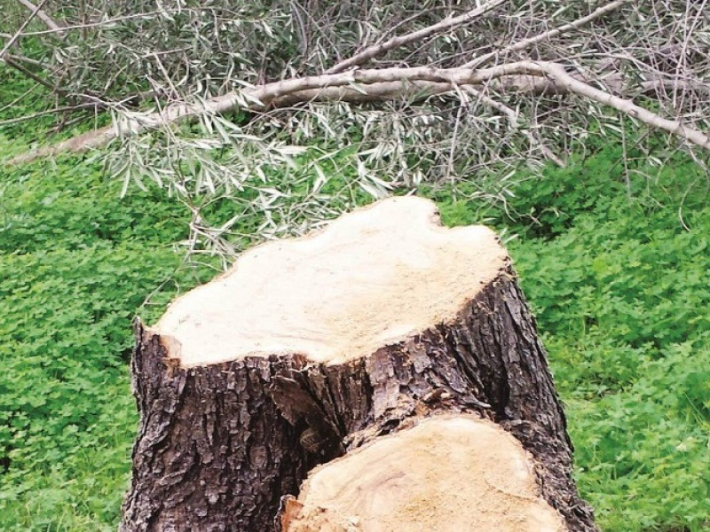 Κλαδί ελιάς καταπλάκωσε 30χρόνο στην Κρήτη και τον σκότωσε