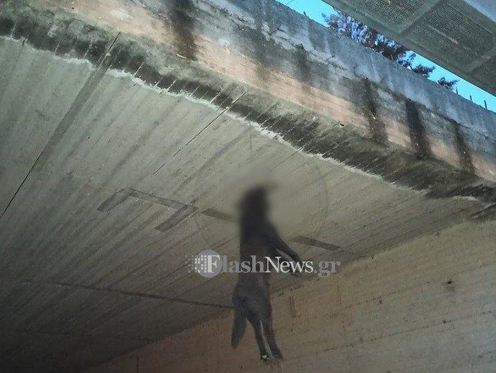 Κρέμασαν σκύλο στα από γέφυρα και τον άφησαν να πεθάνει – Προσοχή σκληρές εικόνες